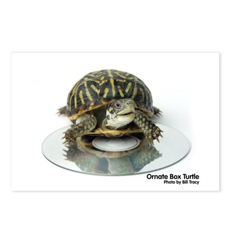Box Turtle Postcards (Package of 8)