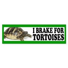 Tortoise Bumper Bumper Sticker