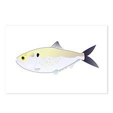 Menhaden Bunker fish Postcards (Package of 8)