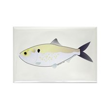 Menhaden Bunker fish Rectangle Magnet