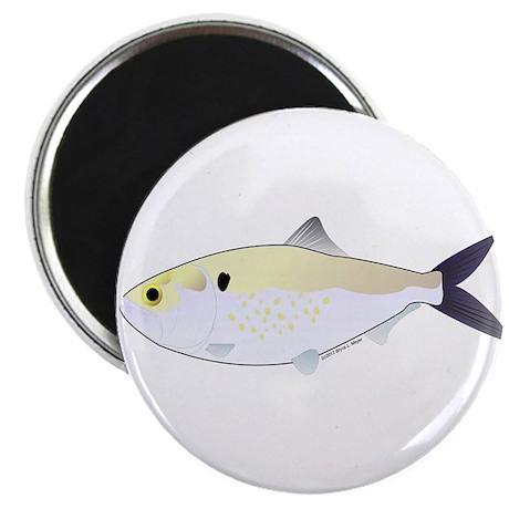 """Menhaden Bunker fish 2.25"""" Magnet (10 pack)"""
