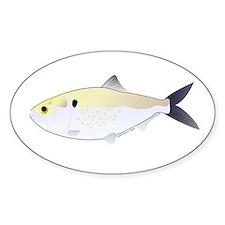 Menhaden Bunker fish Decal