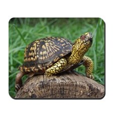 Box Turtle Mousepad