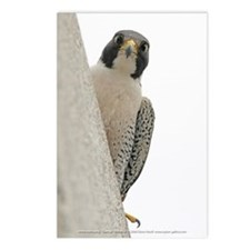 """""""George (watchful)"""" Postcards (Package of 8)"""