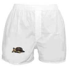 Turtle Boxer Shorts