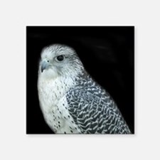 "GyrFalcon out on the town Square Sticker 3"" x 3"""