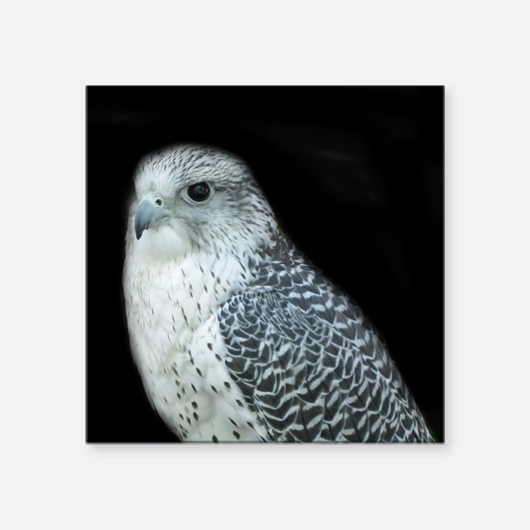 """GyrFalcon out on the town Square Sticker 3"""" x 3"""""""