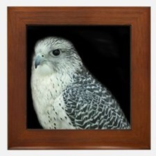 GyrFalcon out on the town Framed Tile