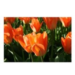 Summer Delight Tulips Postcards (Package of 8)