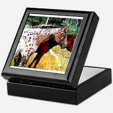 Appaloosa Horses Keepsake Box