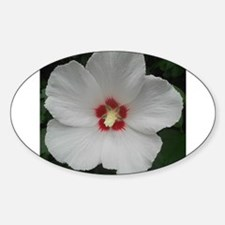 Lovely Rose of Sharon Decal
