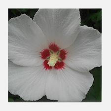 Lovely Rose of Sharon Tile Coaster