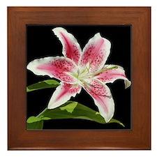 Stargazer Lily Framed Tile