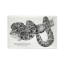 Burmese Python Rectangle Magnet