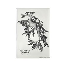 Leafy Sea Dragon Rectangle Magnet
