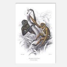 Gibbon Ape Monkey Postcards (Package of 8)
