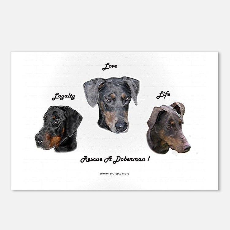 Cute Doberman rescue Postcards (Package of 8)