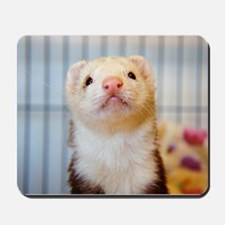 Silly Ferret Mousepad