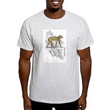 Barbary Ape (Front) Ash Grey T-Shirt