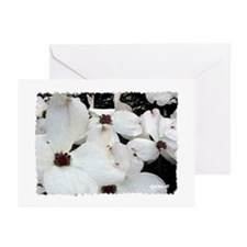 Dogwood Bloom Greeting Cards (Pk of 10)