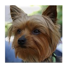 Yorkshire Terrier Tile Coaster