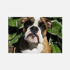 Bulldog Pup Rectangle Magnet