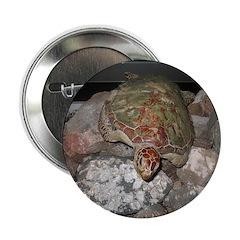 Turtle 2.25