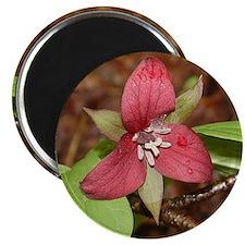 PTXpress Red Trillium Magnet