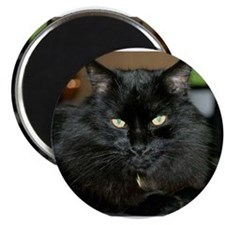 Charlie the black Maine Coon Cat Magnet