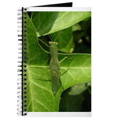 Praying Mantis, Mantid Journal