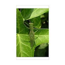 Praying Mantis, Mantid Rectangle Decal