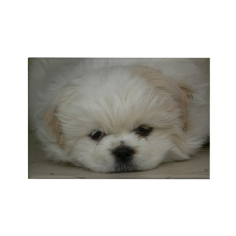 Pekingese Puppy Rectangle Magnet
