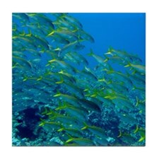 Yellowfin Goatfish Tile Coaster