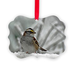 Snowy White-throated sparrow