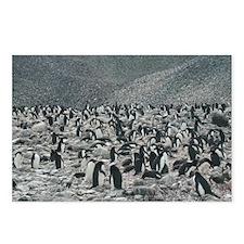 Paulet Island Postcards (Package of 8)