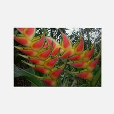Heliconia Rectangle Magnet