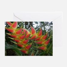 Heliconia Greeting Cards (Pk of 10)