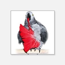 """african grey, parrot Square Sticker 3"""" x 3"""""""