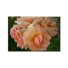 Albuquerque Roses Rectangle Magnet