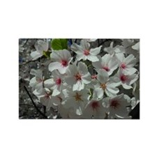 Cherry Blossoms 2 Rectangle Magnet