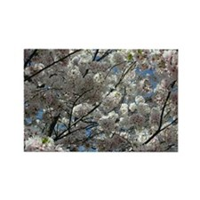 Cherry Blossoms 8 Rectangle Magnet