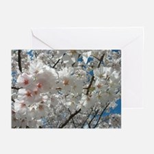 Cherry Blossoms 10 Greeting Cards (Pk of 10)
