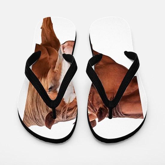 TWO Flip Flops