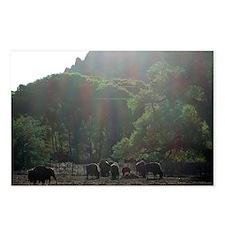 Buffalo @ sunrise-postcards