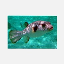 Striped Puffer Fish Rectangle Magnet
