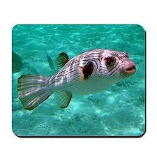 Striped Puffer Fish Mousepad