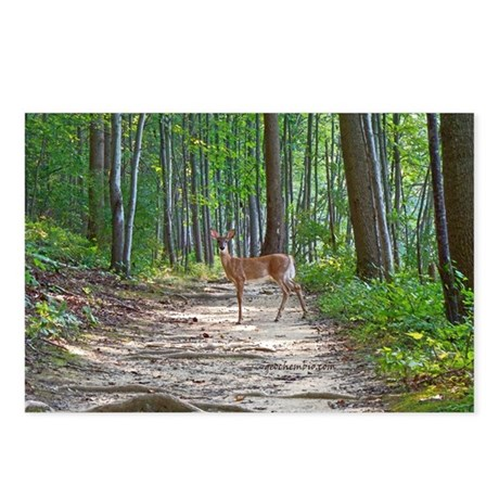 Beautiful doe in forest Postcards (Package of 8)