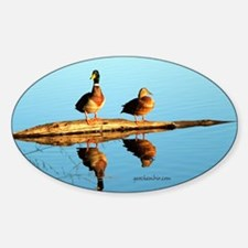 Ducks at sunset Decal