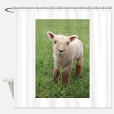 Sweet Lamb Shower Curtain