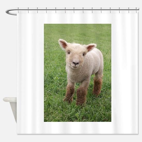 Sweet Lamb Shower Curtain
